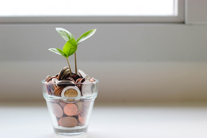a plant growing out of a cup of coins
